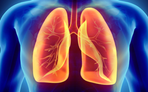 Stock image of a set of orange lungs set against a blue torso